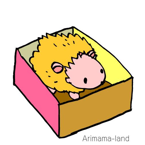 箱入りハリネズミ描いてみました!!
